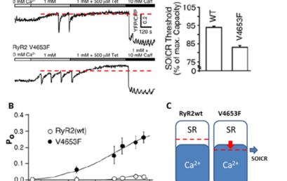 Sub-Cellular Mechanisms of Cardiac Arrythmias